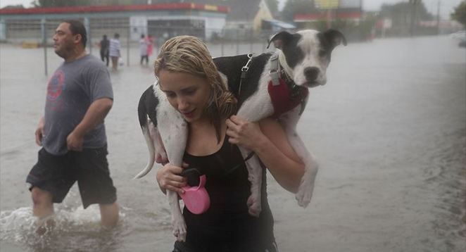 Hurricane-Harvey-Will-Have-Enormous-Impact-on-Pets